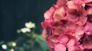 Mayorista de flores