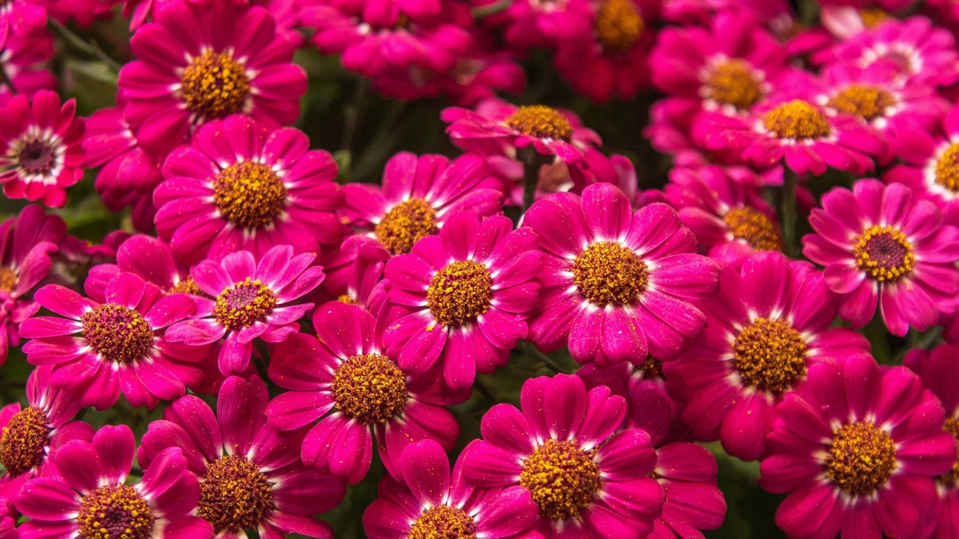 Distribuidor de flores