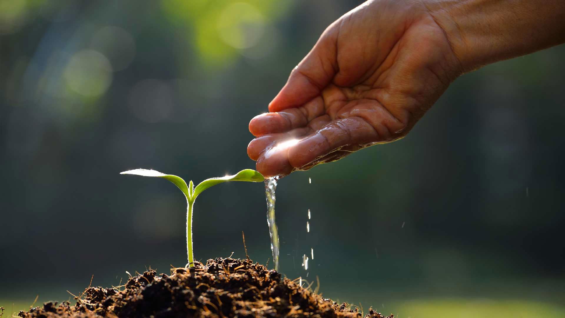 Distribuidor de semillas