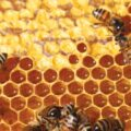 publicidad-para-miel-de-abeja